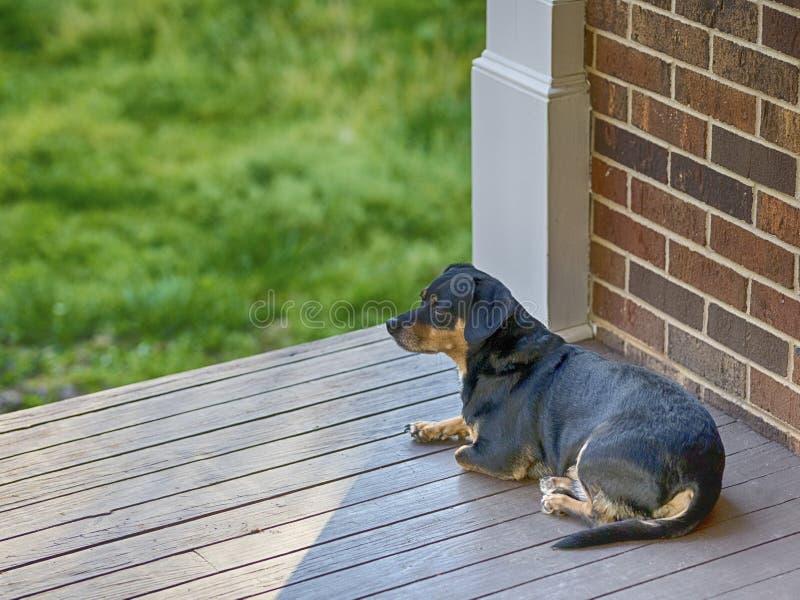 Hond op de portiek stock foto's