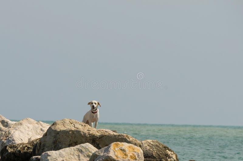 Hond op de rotsen die iemand zoeken royalty-vrije stock fotografie