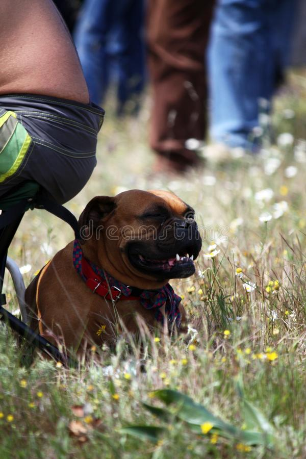 Hond op de schaduw royalty-vrije stock fotografie