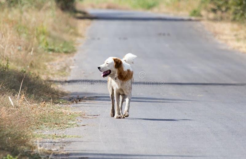 Hond op de weg in aard royalty-vrije stock afbeelding