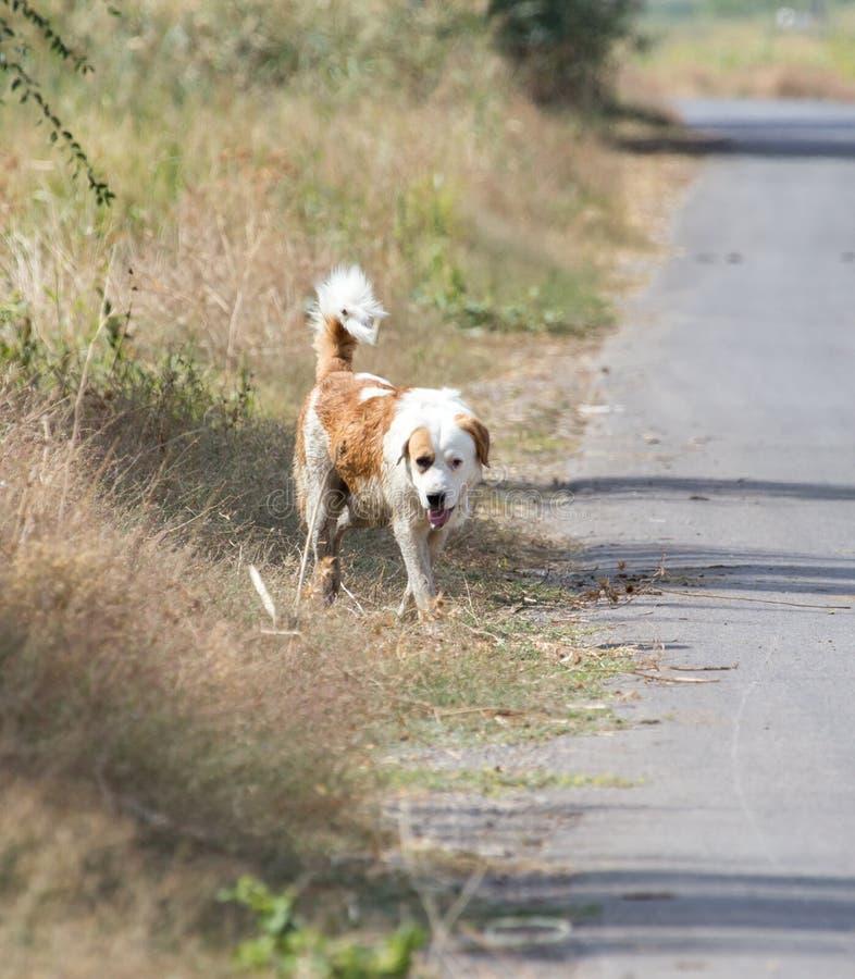 Hond op de weg in aard stock foto's