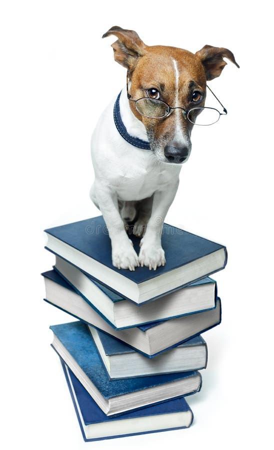 Hond op een boekstapel royalty-vrije stock afbeeldingen