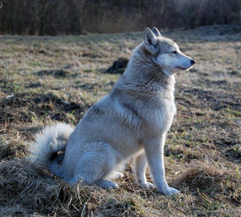 Hond op een gras stock fotografie