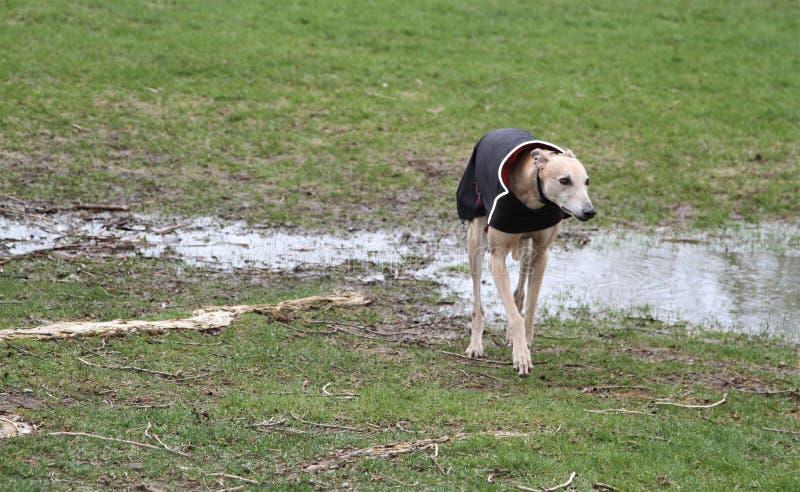 Hond op een regenachtige koude dag omhoog wordt behandeld die stock foto's