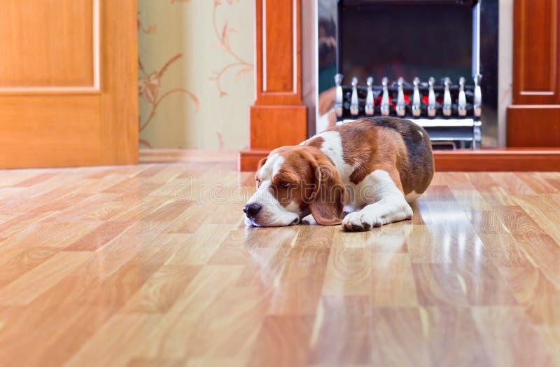 Hond op een vloer stock foto