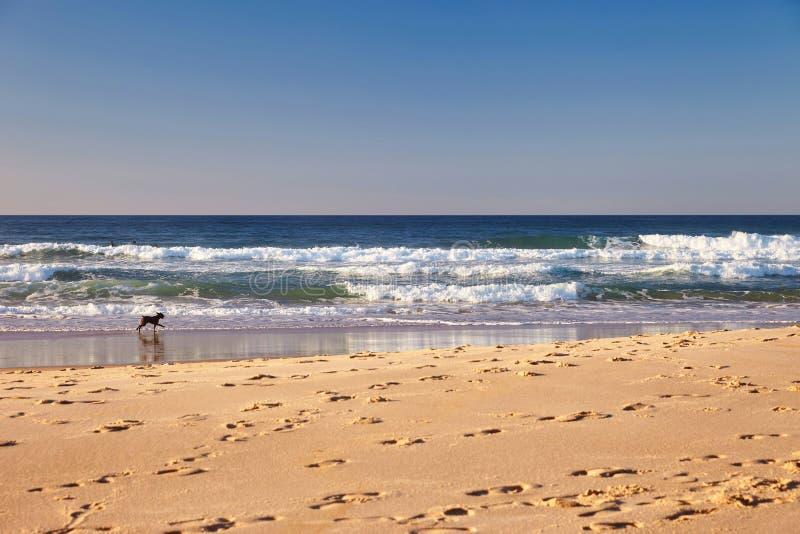 Hond op een zonnig strand royalty-vrije stock fotografie