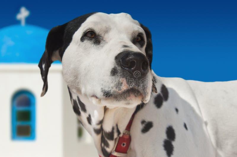 Hond op eiland Santorini stock afbeelding