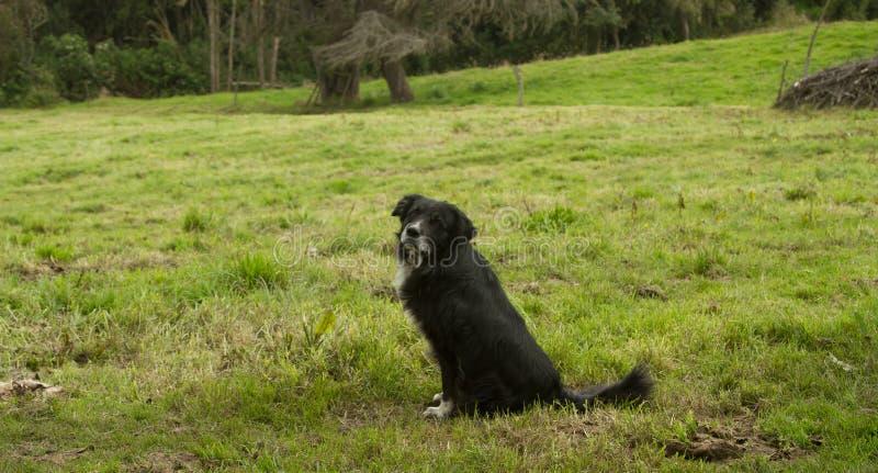 Hond op gras stock foto