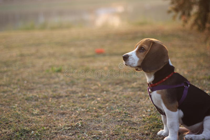 Hond op gras stock foto's