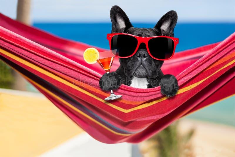 Hond op hangmat in de zomer stock fotografie