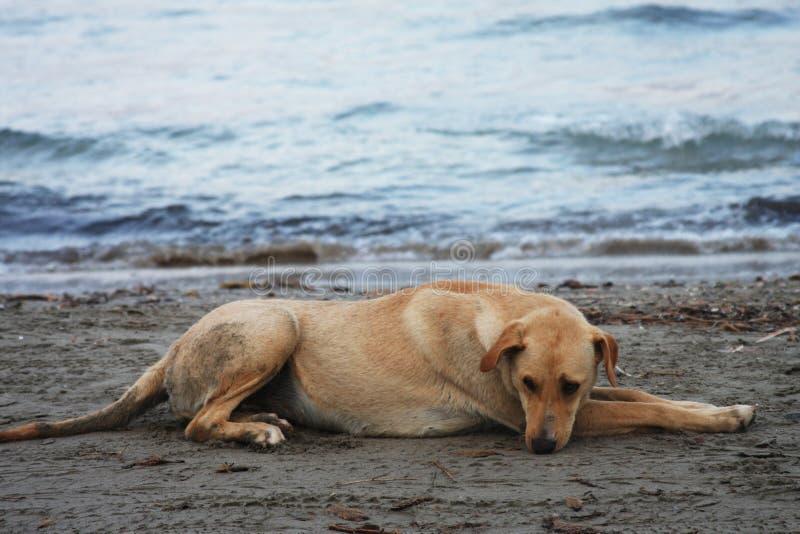 Download Hond op het strand stock foto. Afbeelding bestaande uit dier - 54090612