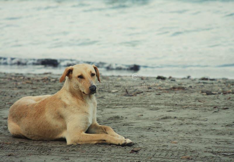Download Hond op het strand stock afbeelding. Afbeelding bestaande uit leuk - 54090615