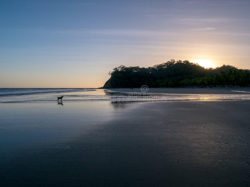 Hond op het strand stock fotografie
