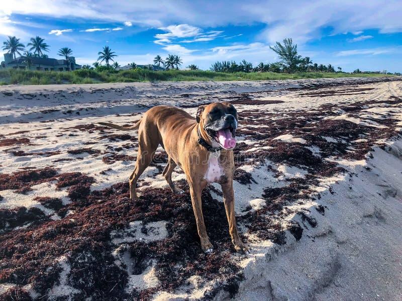 Hond op het zand bij het strand stock afbeeldingen