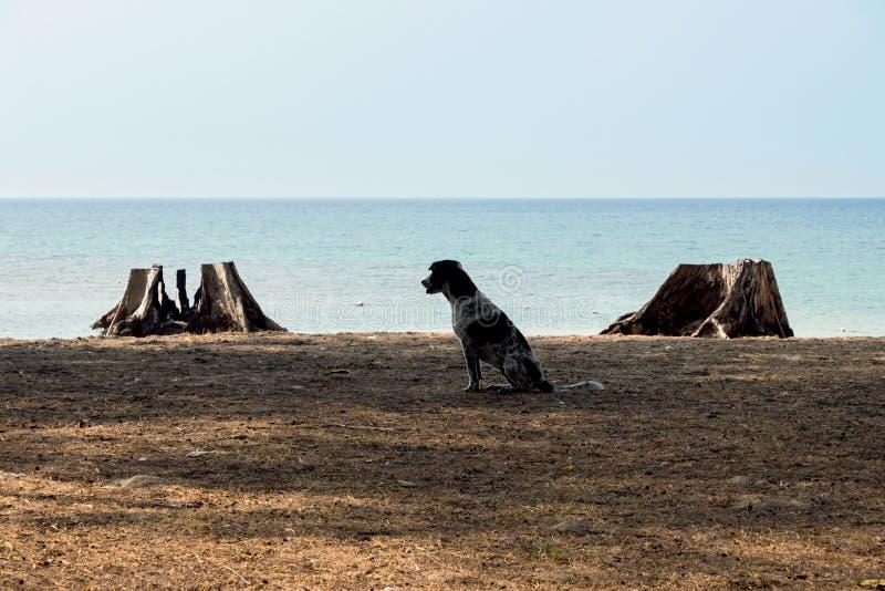 Hond op leeg tropisch strand royalty-vrije stock foto