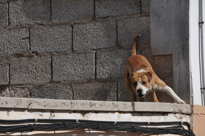 Hond op muur, digitaal fotobeeld als achtergrond stock foto