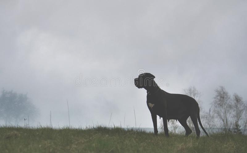 Hond op nevelige achtergrond royalty-vrije stock afbeelding