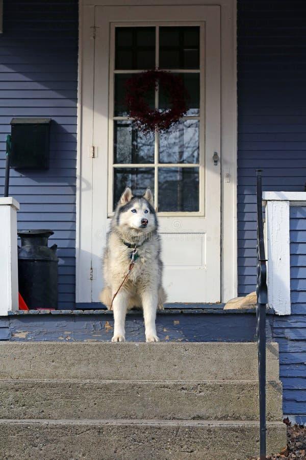 Download Hond op portiek stock afbeelding. Afbeelding bestaande uit sturen - 39109015