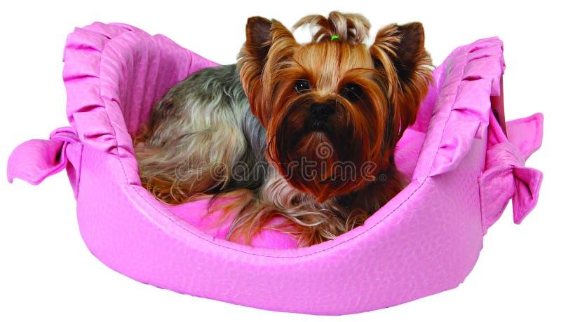 Hond op roze bed stock foto