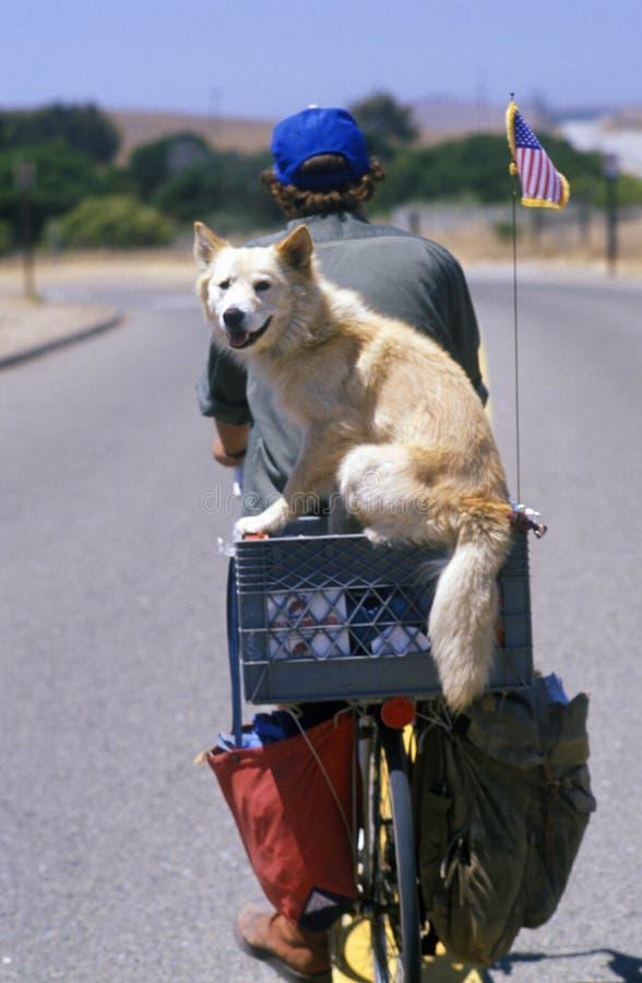 Hond op rug van fiets, Vreedzame Kustweg, CA royalty-vrije stock foto's