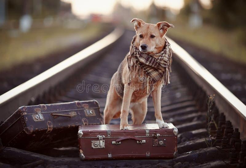 Hond op sporen met koffers stock fotografie