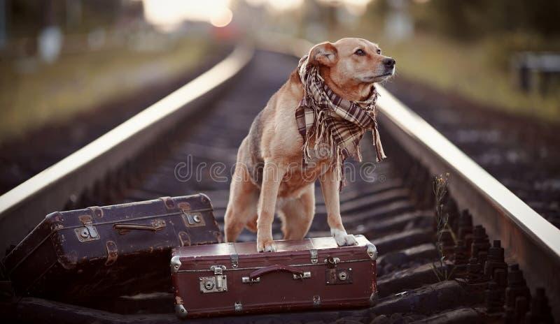 Hond op sporen met koffers royalty-vrije stock afbeelding