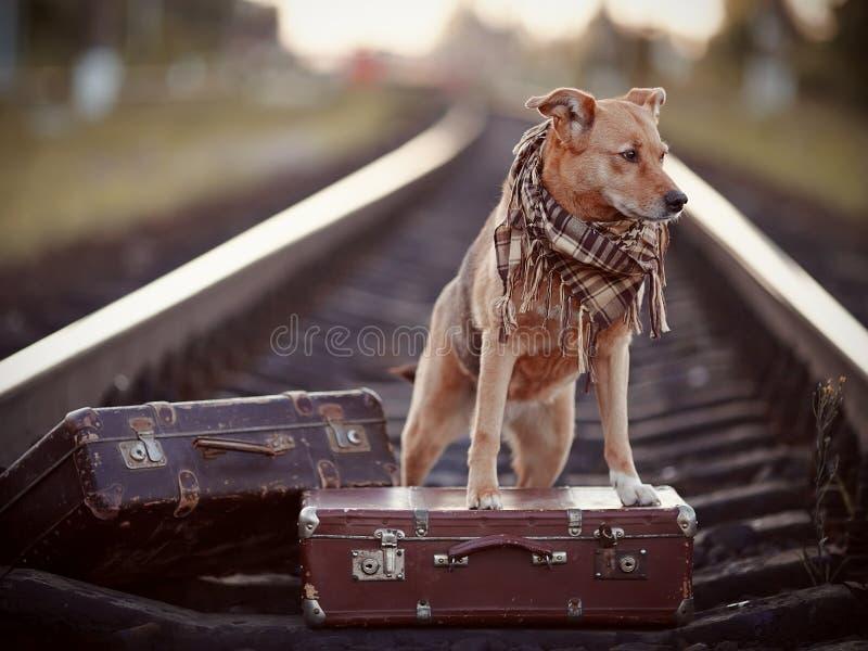 Hond op sporen met koffers royalty-vrije stock fotografie