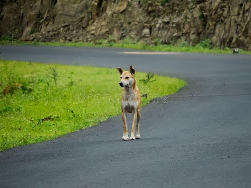 Hond op Straat, die weg eruit zien stock fotografie