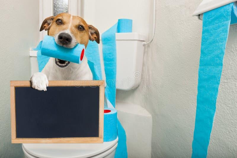 Hond op toiletzetel royalty-vrije stock fotografie