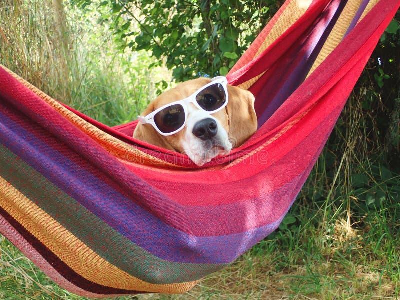 Hond op vakantie stock fotografie