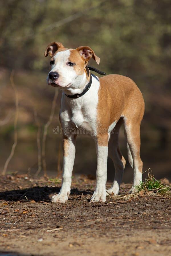 Hond in openlucht. royalty-vrije stock foto