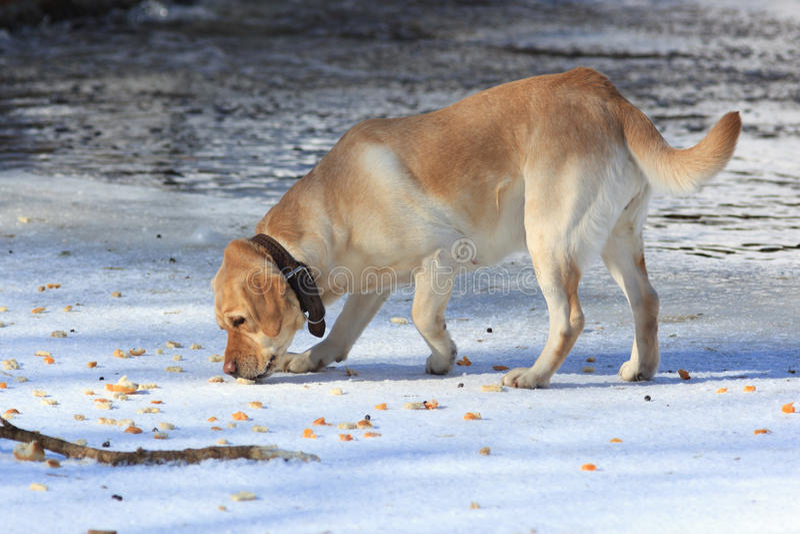 Hond in openlucht. royalty-vrije stock fotografie
