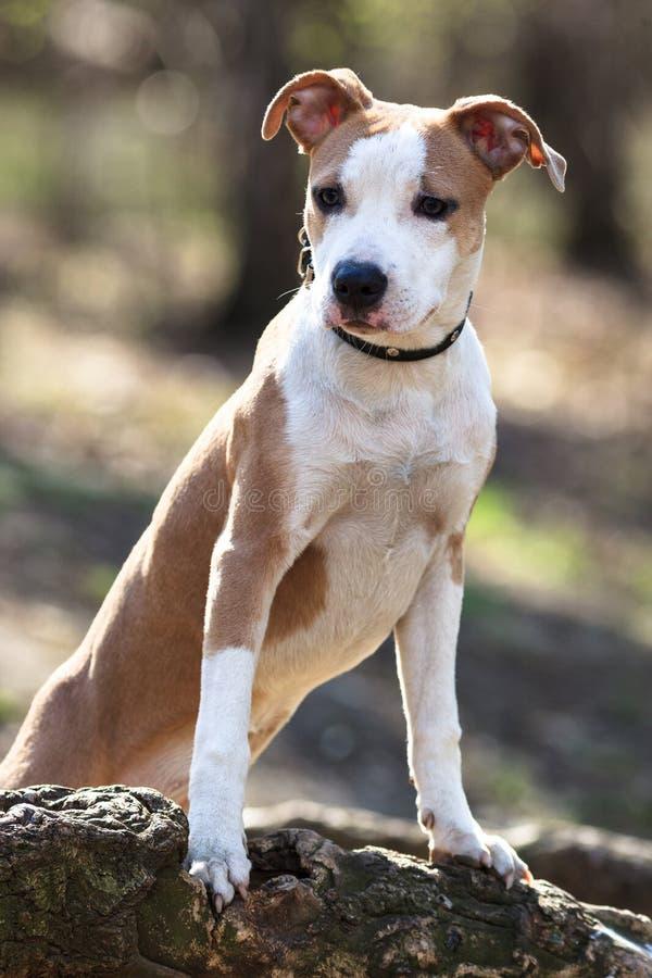 Hond in openlucht. stock foto's