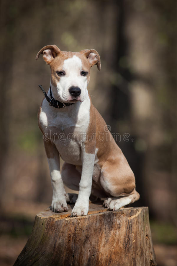 Hond in openlucht. stock foto