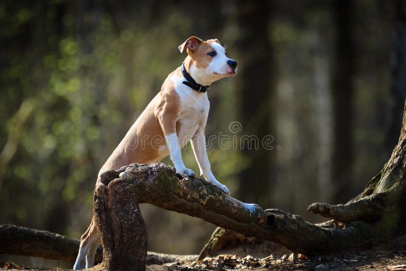Hond in openlucht. royalty-vrije stock afbeelding