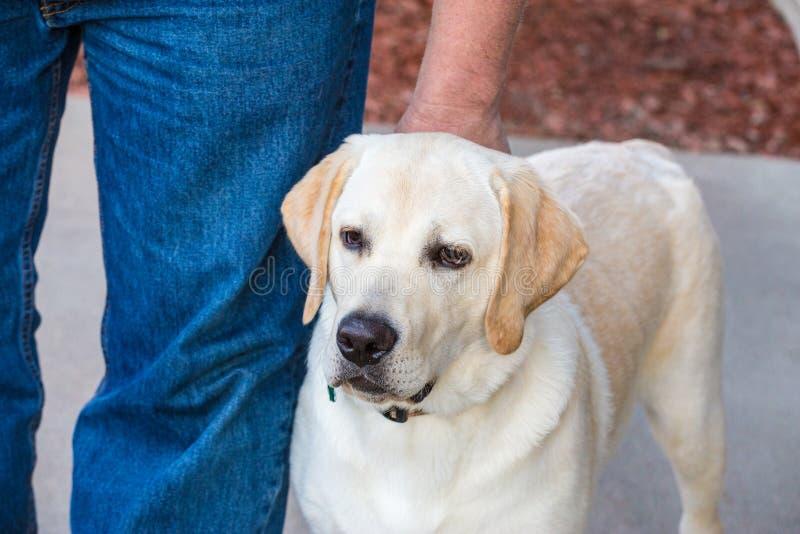 Hond opleiding stock fotografie