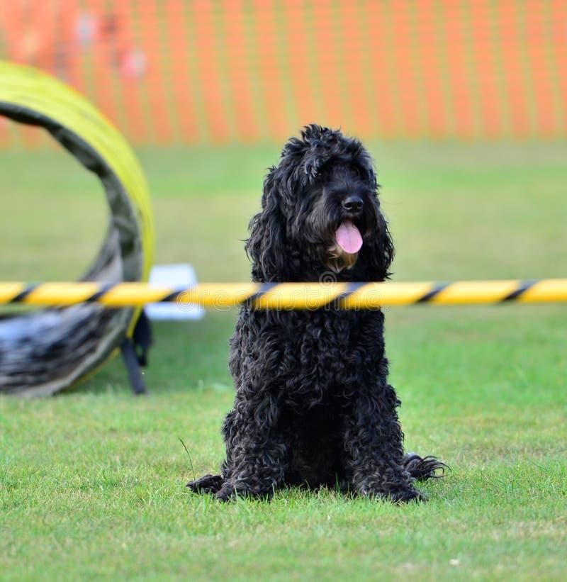Hond opleiding voor beginners stock foto