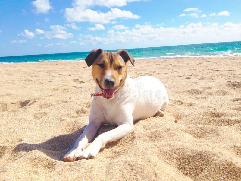 Hond, overzees en strand in de zomer stock afbeeldingen