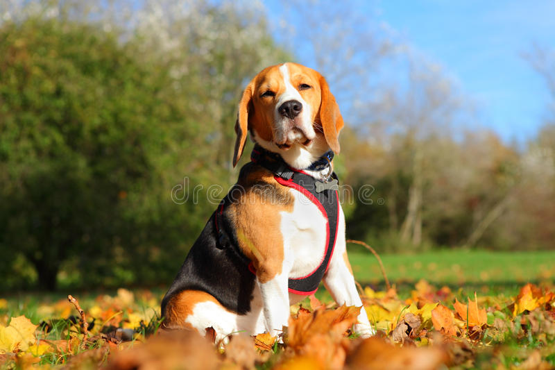 Hond in park royalty-vrije stock afbeeldingen