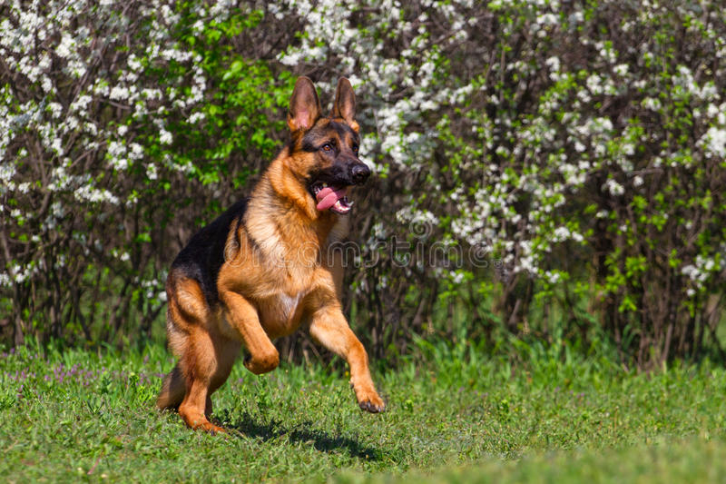 Hond in park in werking dat wordt gesteld dat royalty-vrije stock foto