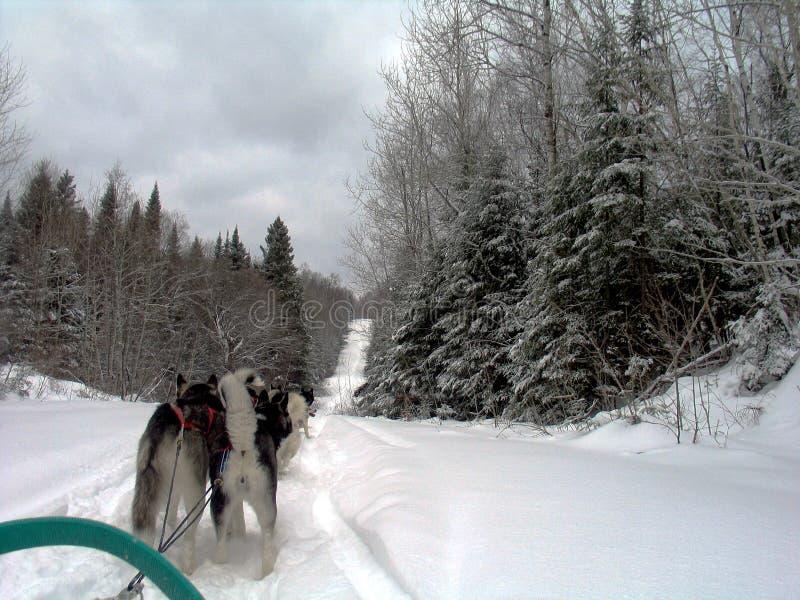 Hond in Quebec Canada, Noord-Amerika royalty-vrije stock afbeeldingen