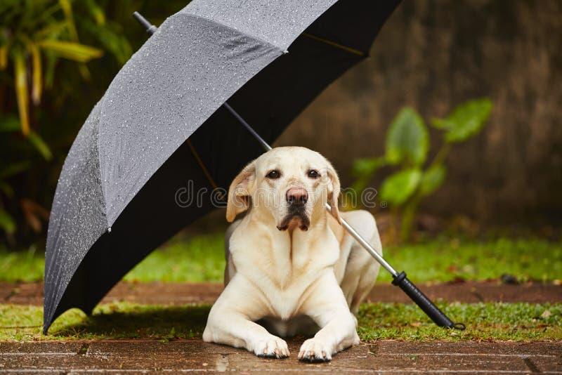 Hond in regen stock fotografie