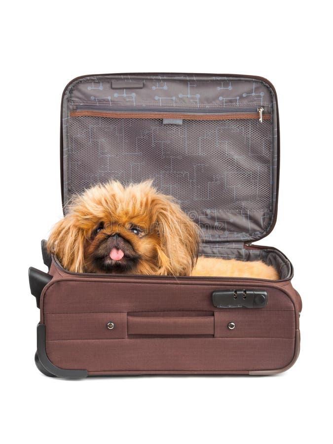 Hond in reisgeval royalty-vrije stock foto's