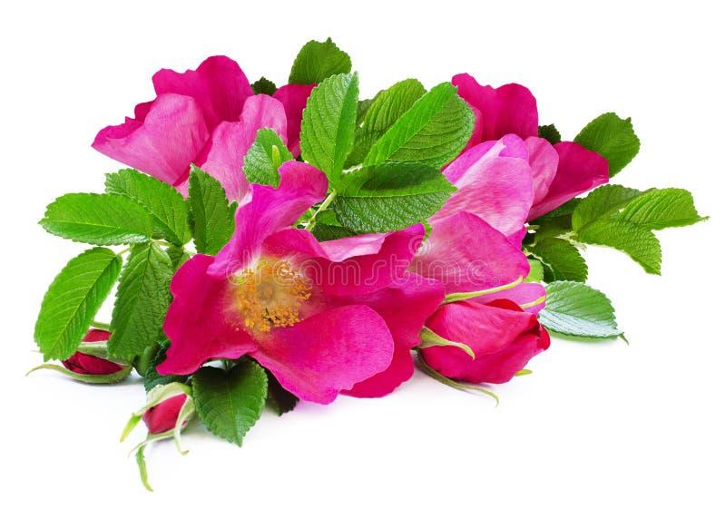 Hond-roze bloemenboeket royalty-vrije stock afbeelding