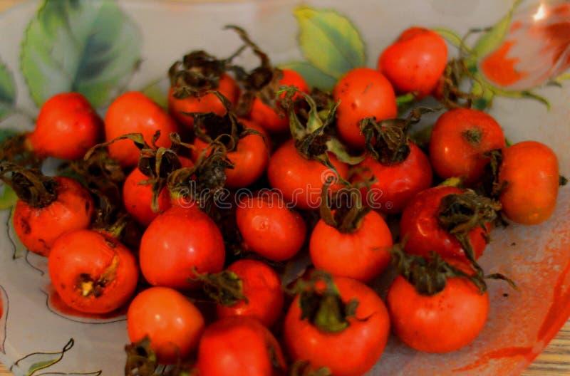 Hond-roze fruit! Installaties stock fotografie