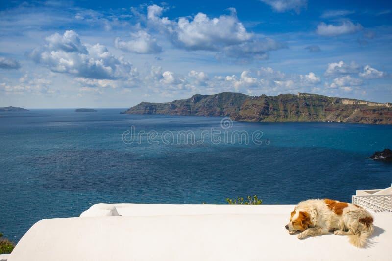 Hond in Santorini stock afbeelding