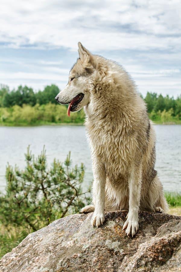 Hond schor in aard stock foto's
