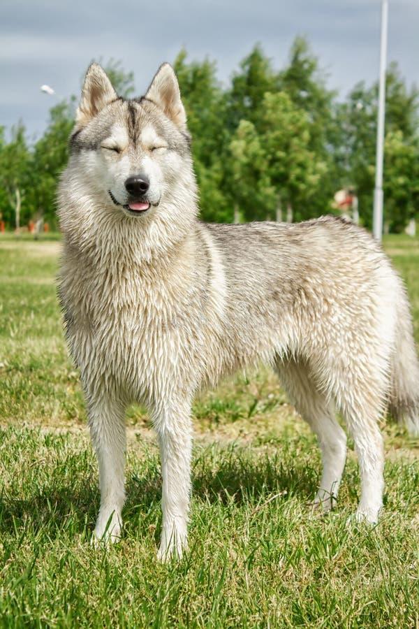 Hond schor in aard royalty-vrije stock afbeelding