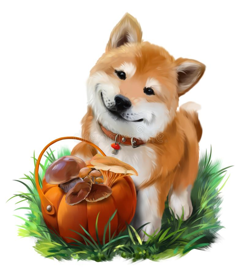 Hond Shiba Inu en een mand van paddestoelen royalty-vrije illustratie