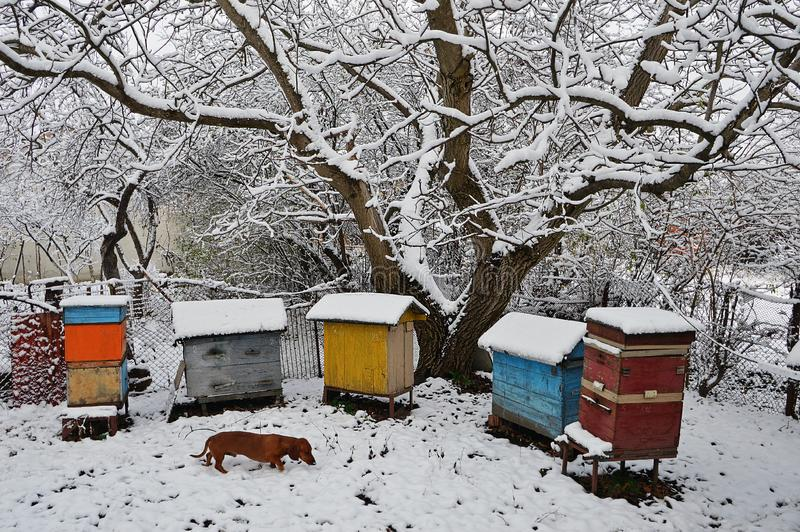 Hond tekkel genoemde Bim onder de bijenkorven royalty-vrije stock afbeeldingen
